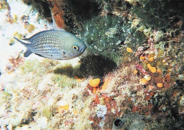 scuba diving rome2